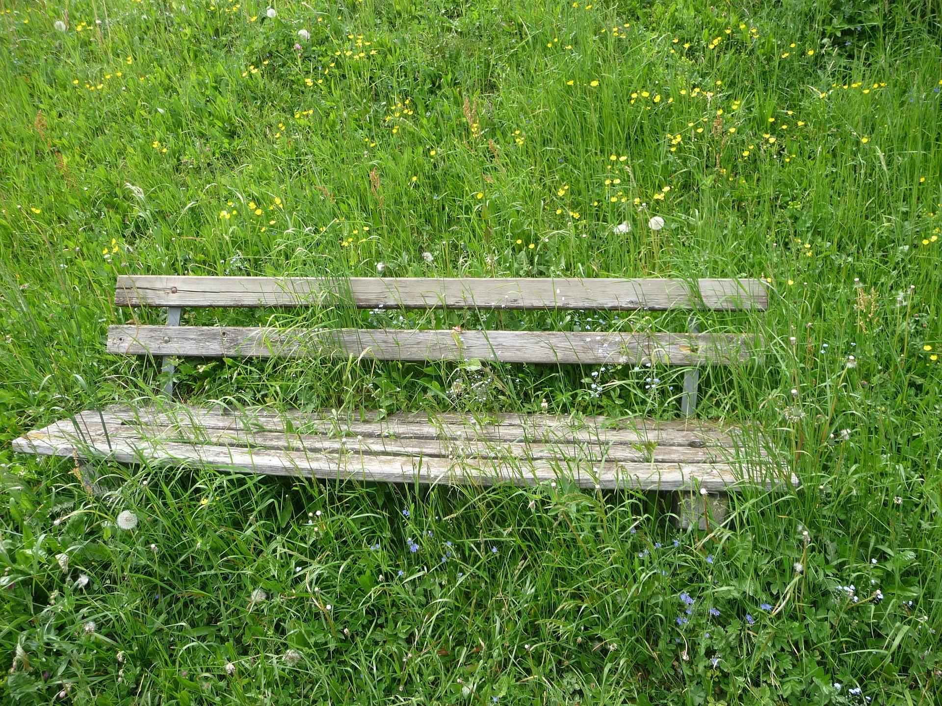 Werde Gärtner deiner Gedanken